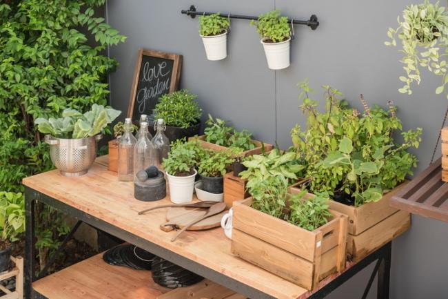 男性にも人気の家庭菜園の趣味